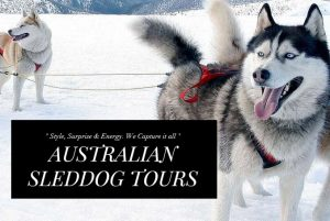Australian Sled Dog Tours have operated tours on Mt Buller since 2014.