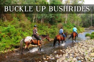 Bucke Up Bushrides. Discover the beauty of Victoria's High Country with a true horseback adventure. Our guides will take you through hidden trails & unforgettable scenery.